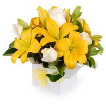 Bright Neutral Coloured Flower Box: