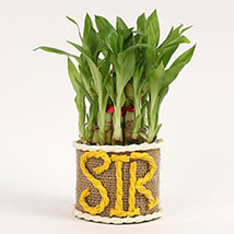 Elegant Lucky Bamboo For Sir: Gifts For Teacher's Day