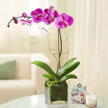 Purple Orchid Plant In Glass Vase: Gifts for Womens Day