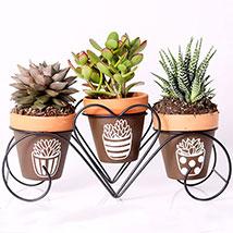 Set of 3 Plants in Triplet Pot Base: Indoor Plants