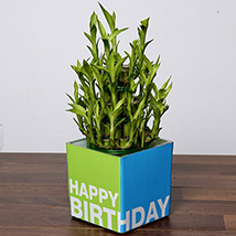 3 Layer Bamboo Plant For Birthday: Gift Delivery Abu Dhabi