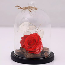 Red Forever Rose In Glass Dome: Dried Flower Bouquet