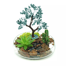 Potted Succulent & Cactus Under A Wishing Tree: