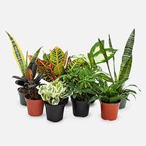 7 Beautiful Plants: Money Plants