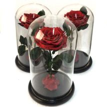 Preserved Roses in a Dome: Send Gifts to Philippines